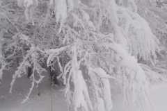 Зимушка-зима. Автор: Ярослав Уваров, <br/> МКОУ НОШ с.Ленинское